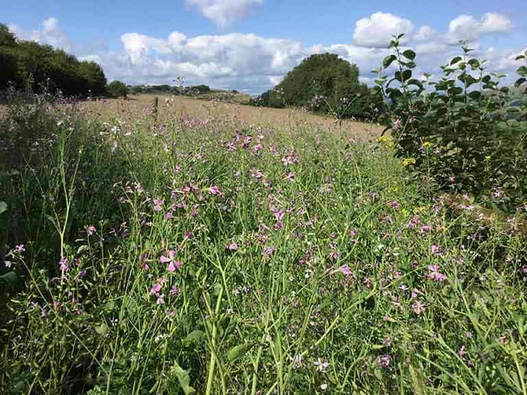 A field of wildflowers overlooking the Kelker Well Roundhouse glamping site